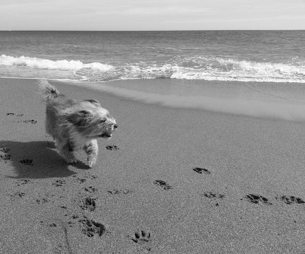 Feeling freedom Animal Beach Blackandwhite Coastline Dog Free Freedom Happy Horizon Over Water Movement Nature Ocean Pet Relaxation Relaxing Sand Sea Seascape Shore Summer Tranquil Scene Vacations Water Waves Live For The Story