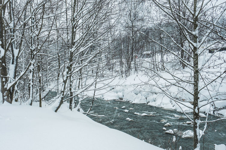 Snow Cold Temperature Winter Tree Bare Tree Plant Nature Covering Branch Land White Color Tranquility Beauty In Nature No People Environment Frozen Day Scenics - Nature Tranquil Scene Snowing Outdoors Extreme Weather Blizzard Snowcapped Mountain Ditch