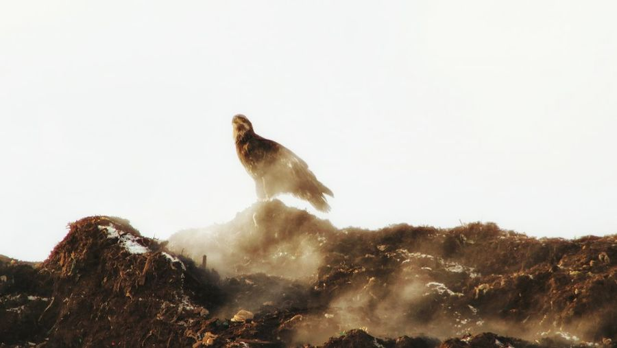 Animal Wildlife Animals In The Wild One Animal Animal Mammal Nature No People Animal Themes Outdoors Day Nature Reserve Eagle