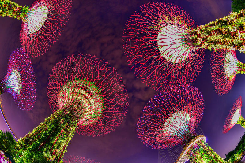 Supertree in Singapore in night time. Supertree is famous spot for traveler in Singapore city. Night Lights Singapore SuperTree Beauty In Nature Cactus Close-up Day Flower Focus On Foreground Freshness Full Frame Garden By The Bay Green Color Growth Multi Colored Natural Pattern Nature No People Outdoors Pattern Plant Red Selective Focus Succulent Plant