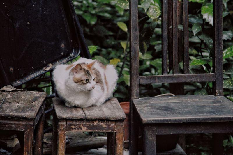 Animal Themes Mammal Animal One Animal Domestic Pets Domestic Animals Cat Seat Domestic Cat Sitting Chair Relaxation