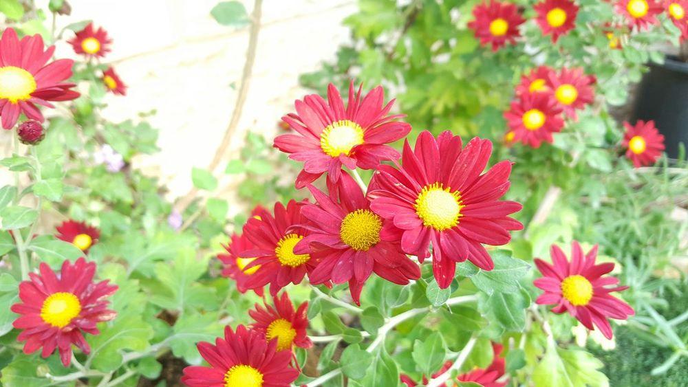 Flowers Winter