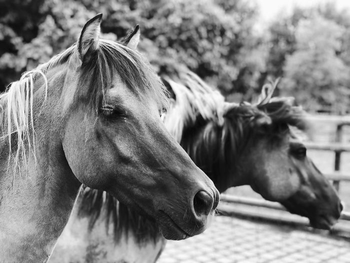 Close-Up Of Horses Outdoors