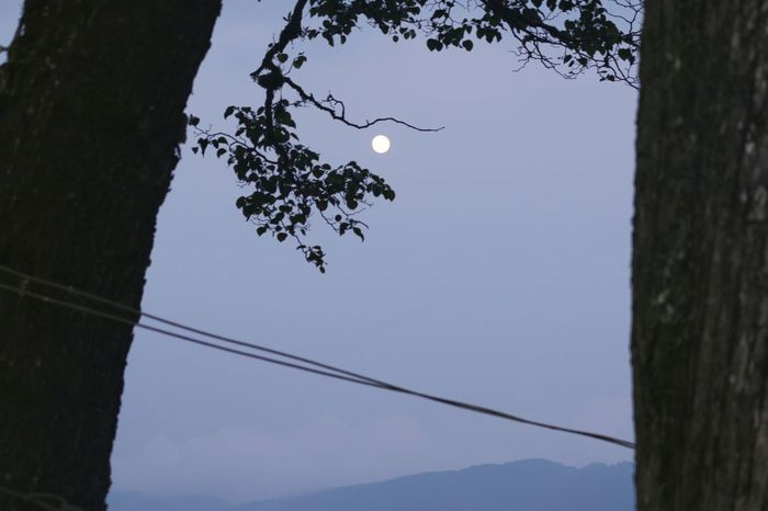 The full moon romance.. Moon Tree Tree Trunk Mountain Sky Animal Themes