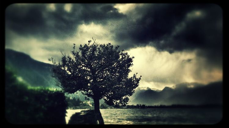 Peaceful View Storm Tree Clouds @kimpt