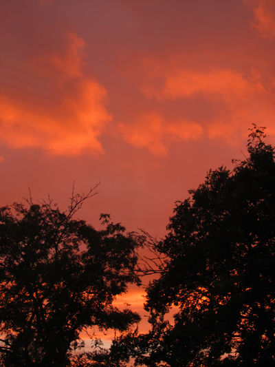 Sunset. Atmosphere Atmospheric Mood Beauty In Nature Branch Cloud Cloud - Sky Majestic Nature Non-urban Scene Orange Color Outdoors Scenics Silhouette Sky Sunset Tranquil Scene Tranquility Tree Treetop Canon Powershot