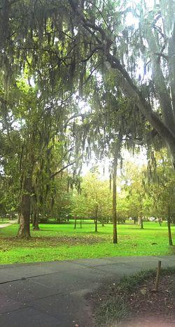 Park Oak Trees Trees Droopy Green City Park