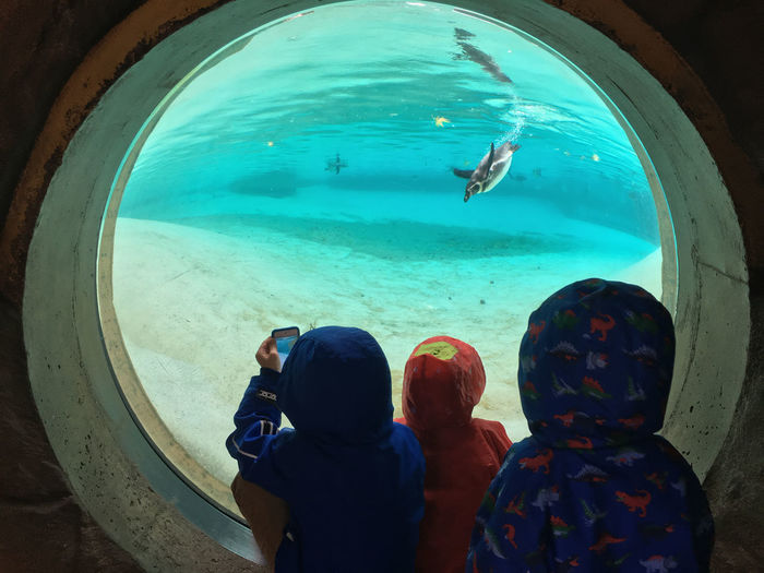 It's all happening at the zoo Bubbles Children Circle Zoo Penguin Pool Swimming Underwater