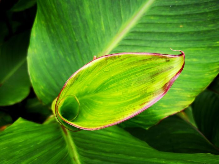 view of plant