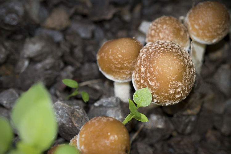 Mushrooms Brown Cg  Close-up Day Fungi Fungus Macro Mushrooms Nature Seemore Seemorecg Small