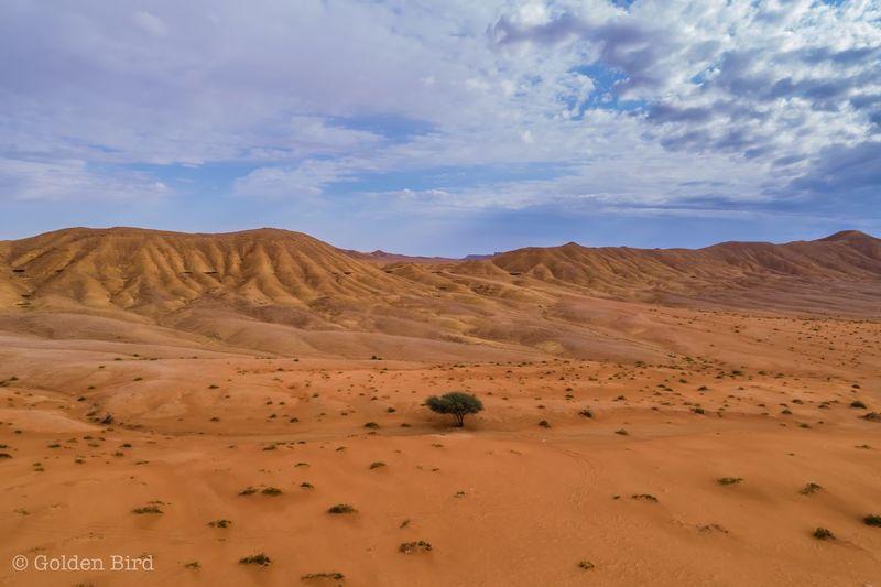Tree desert and