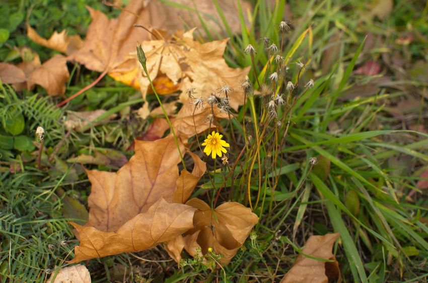 Nature листья желтые осень Forest Лес Nature
