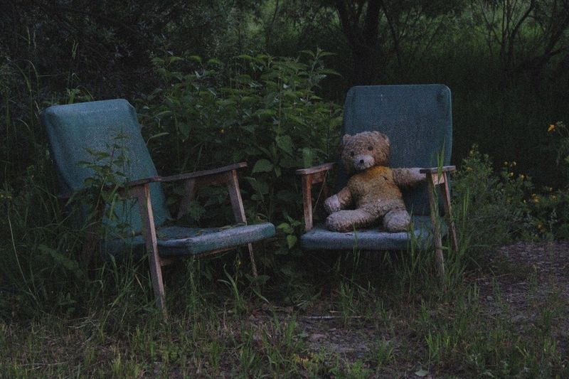 Teddy bear on old armchair by plants