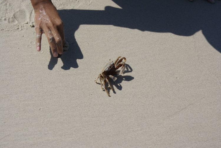 High angle view of hand on sand