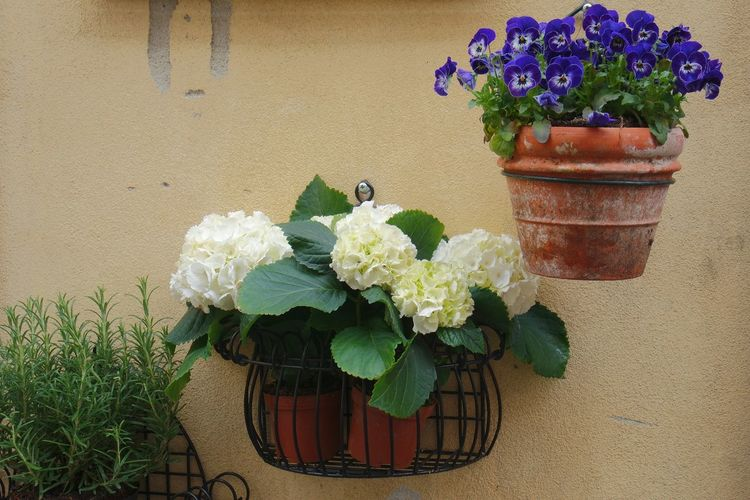 decorations... Taking Photos Deutschland Photography Getting Inspired Spring Flowers Spring Report
