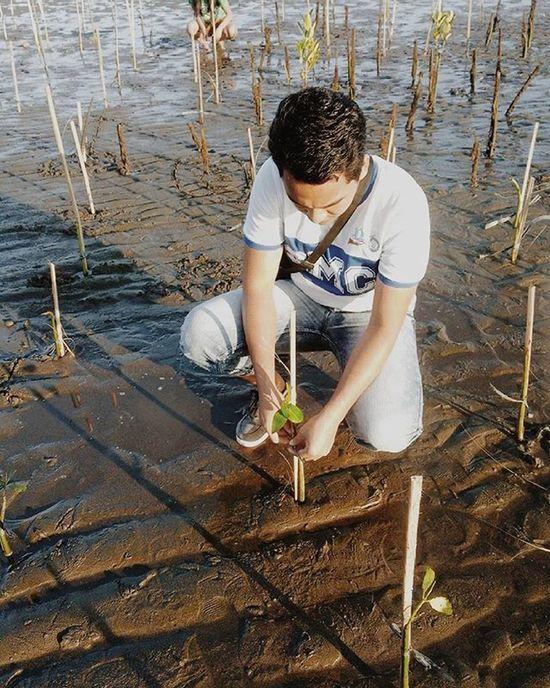 Mangroove Treeplanting Smciligan 100 %SociallyResponsible