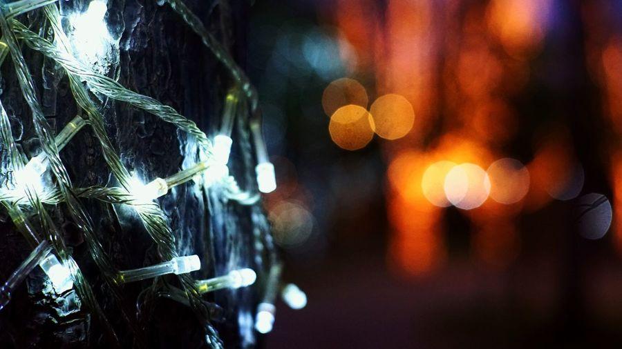 Secrets Illuminated Night Christmas Christmas Decoration Outdoors Light Winter Christmas Lights