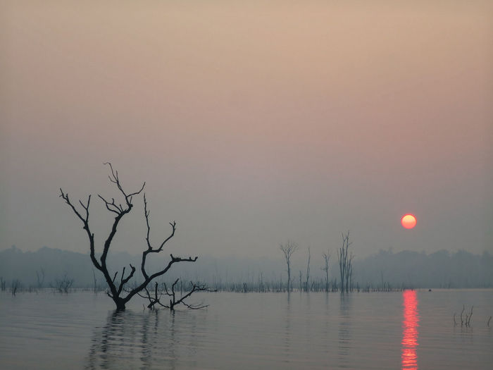 The sun begins to rise. Bare Tree Beauty In Nature Day Lake Laos Nature No People Outdoors Scenics Sky Sunrise Tranquil Scene Tranquility Tree Water Waterfront