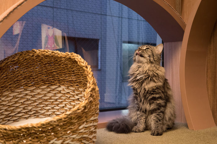 Animal Themes Built Structure Cat Catcaffe Close-up Day Domestic Animals Domestic Cat Indoors  Indoors  Mammal No People Pets Window
