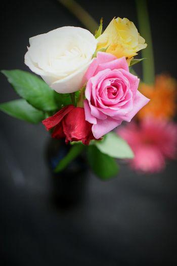 Coloroflife Color Of Life Flowers Roses Pretty Love Colors Noastalgie