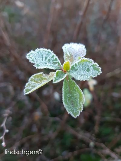 Väterchen Frost! Nature Beauty In Nature Leaf EyeEm Nature Lover Nature EeYem Best Shots Nature In Beauty Frosted Nature Frosty Nature Beauty In Nature EyeEm Best Shots - Nature Blätter EyeEmBestPics Glücklich Blatt Naturelovers