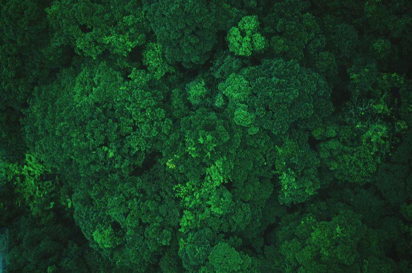 Trees from above look like broccoli. Hong Kong Flying High Nature EyeEm Bestsellers Market Bestsellers September 2016 Bestsellers