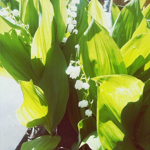 Flowers #цветы #photo #фото сад сад First Eyeem Photo