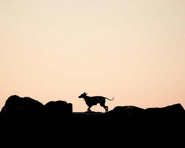 Silhouette dog on rock formation against clear sky