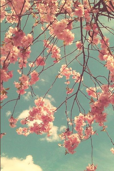 Flowers Tree Nature_collection Sky_collection
