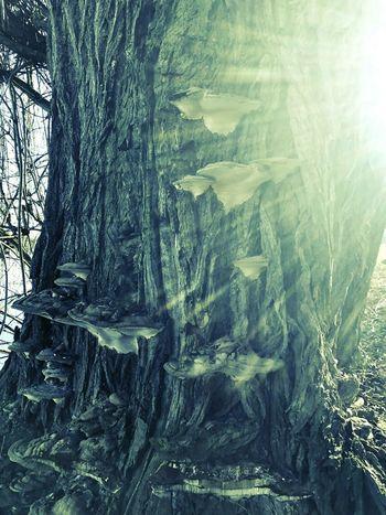 Tree Beauty In Nature Nature Baumstamm Tree Trunk Wald Pilze Fantasy Magical Magic Elf Elf Fantasy Fair Elfenbaum Sunlight Scenics EyEmNature Mysterious EyeEmNewHere The Great Outdoors - 2017 EyeEm Awards Nature Photography Nature Architecture