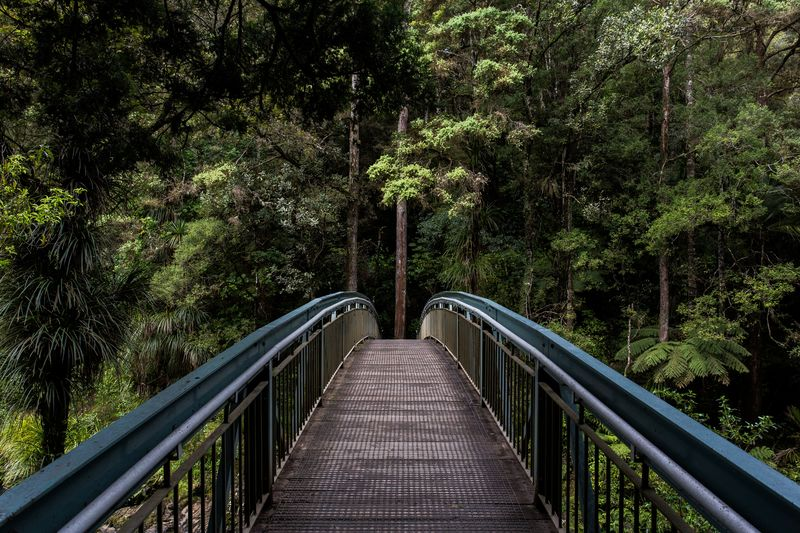 Tree Railing The Way Forward Footbridge Connection Bridge - Man Made Structure Growth Outdoors Day Forest Nature No People