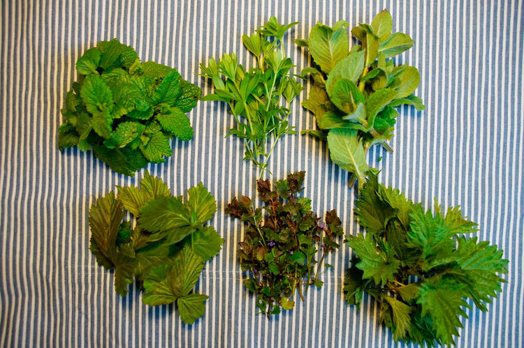 Bunch Close-up Day Flower Food Food And Drink Freshness Green Color Growth Healthy Eating Herbal Medicine Kräuter Leaf Mint Leaf - Culinary Nature No People Outdoors Plant Tea Tee