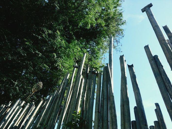 Tree Bamboo Bamboo Art Bamboodesign Bamboo - Material Wall Bamboo Wall Bamboos Nature Natural Pattern Nature Wall