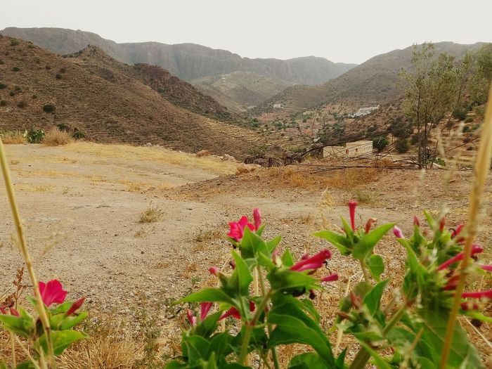 LandScape: Tagadirt-Ayoufis _ Idaougnidif TagadirtOyoufis Ayoufis Idaougnidif Atlasmountains Antiatlas Company Paysage MoroccoTrip Morocco_travel Argan Trees The Great Outdoors - 2018 EyeEm Awards Flower Mountain Desert Prickly Pear Cactus Arid Climate Cactus Rural Scene Pink Color Plant Sky Barrel Cactus Needle - Plant Part Wildflower Succulent Plant Uncultivated Aloe Vera Plant