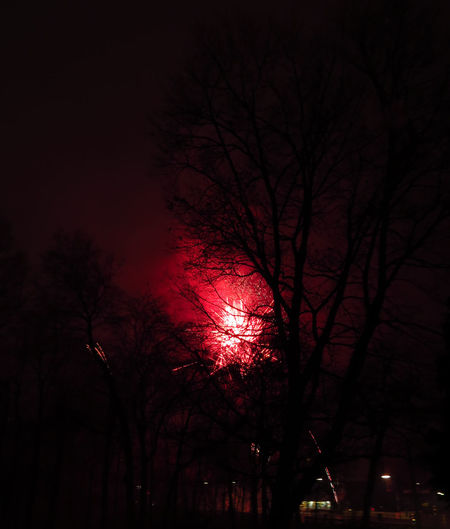 Newyearseve NewYear Tree Night Bare Tree Illuminated Silhouette Celebration Red Firework Display Firework - Man Made Object Firework Fireworks Sinister Insidious Red Light Exploding Explosion Silvester Event Branch Low Angle View New Year Around The World New Year's Eve New Year's Eve Fireworks