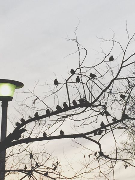 Tree Streetphotography 生きる 日々 Life Force Day 公園 Birds Shillouette