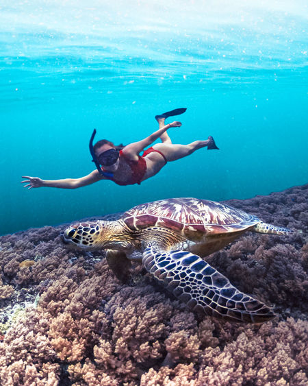 Girl freediving in the ocean with a wild sea turtle and coral reef