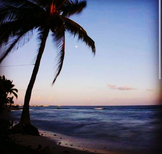 Paradise Relaxing Taking Photos Traveling On The Beach Beachphotography Travel Photography Hello World Exploring New Ground Beach Day Life Is A Beach @michrivalcoba Michellerivalcoba Michrivalcoba