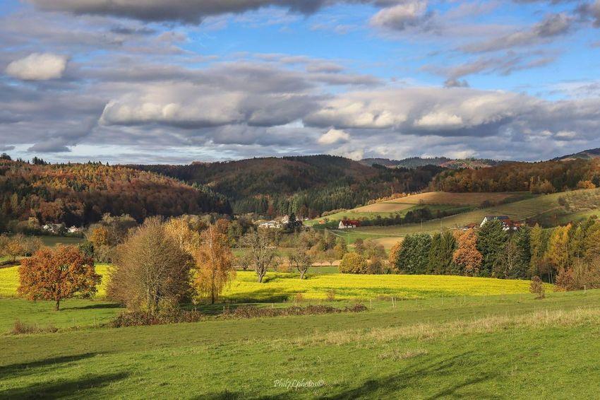 Taking Photos Herbststimmung Photographer Fotografia Nature Landscapes Autumn Colors Autumn Herbst Landscape #Nature #photography Landscape_Collection Schwarzwald Phil7lphotos Landscape_photography Landscape Photography