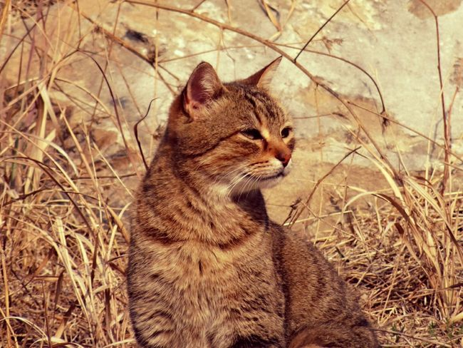 One Animal Animal Themes Domestic Cat Sitting No People Pets Day Outdoors Nature Close-up Lookintomyeyes Sitting Summer Sun The Great Outdoors - 2017 EyeEm Awards Great Outdoors Lovephotography  Beauty In Nature Enjoy The Little Things Freedom Life Animals In The Wild Animal Representation Cats Of EyeEm Arrogant Look Wildlife & Nature
