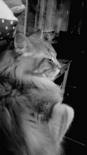 CATS!!!!! Cat♡ Cats Galactus_god Photography
