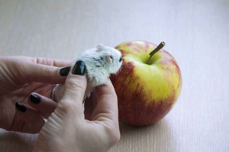 Close-up of hand holding apple