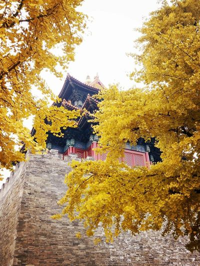 Yellow Color Autumn🍁🍁🍁