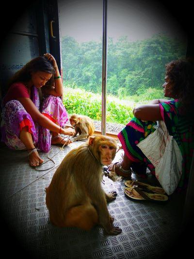 Train Passengers Monkeying Around Dog Madari