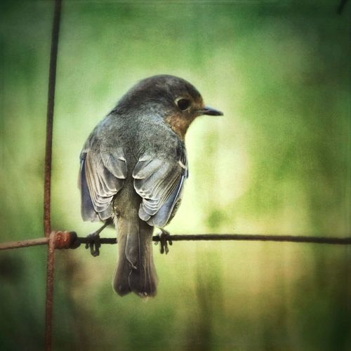 Birdie... Animal Themes Bird One Animal Wildlife Perching EyeEm Nature Lover Nature Photography Beauty In Nature Countryside Tranquility Nature_collection Animals In The Wild Eyem Nature Lovers  Nature