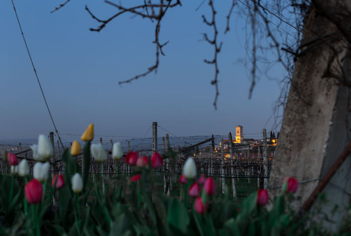 A view of San Pietro In Cariano, a nice village in Valpolicella, Italy Architecture Beauty In Nature Church Countryside Field Flower Italy Landscape Landscape_Collection Nature Outdoors Plant Sky Travel Destinations Tree Valparaiso, Chile Valpolicella
