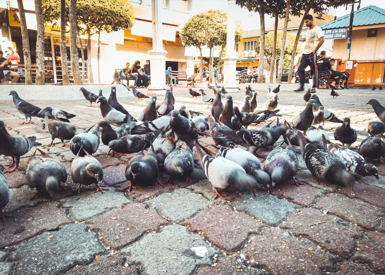 FLOCK OF BIRDS ON STREET
