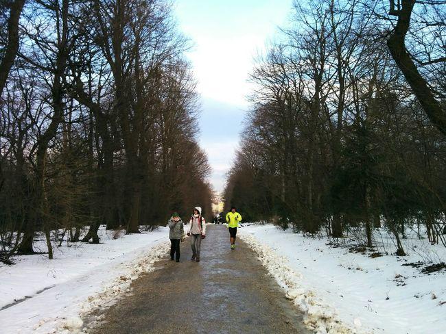 Running Runner Vienna Schönbrunn Austria Austrianphotographers Winter Sunset Trees Park