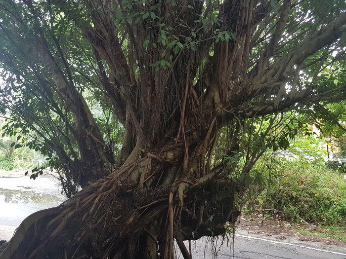 Scary tree... The Week On EyeEm