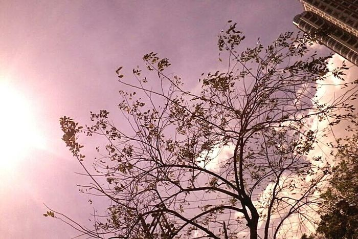 Lookingup Tree And Sky Old Phone Photo